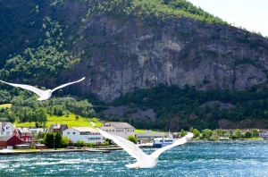 Norwegian seagulls. Picture from One Charming Life.